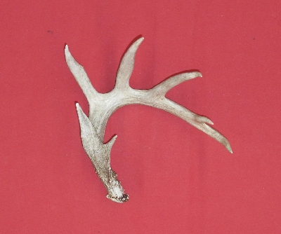 Picture of this lot Whitetail Deer Antler Sides
