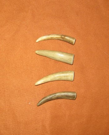 Picture of this lot Whitetail Deer Antler Tips