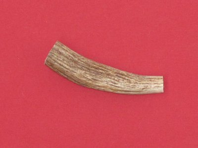 Picture of this lot Moose Antler Tines