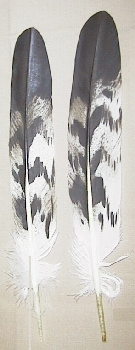 Picture of this lot Eagle Feathers Imitation