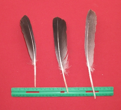 Picture of this lot Goose Feathers