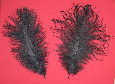 Picture of this lot Ostrich Feathers Plumes
