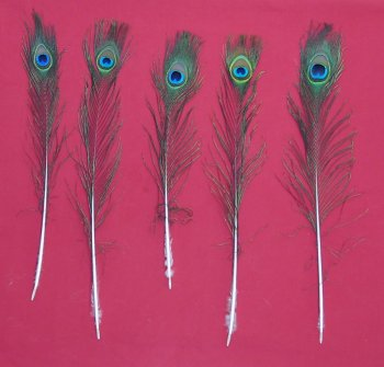 Picture of this lot Peacock Feathers