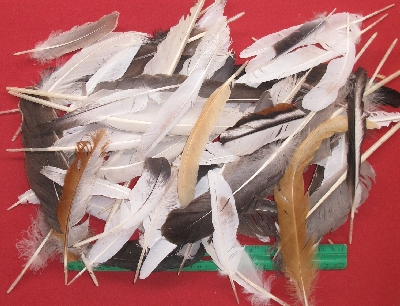 Picture of this lot Feathers - Miscellaneous