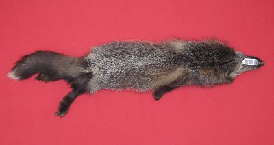 Picture of this lot Raw Fur - Cross Fox