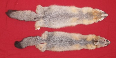 Picture of this lot Raw Fur - Kit Fox