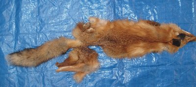 Picture of this lot Raw Fur - Red Fox