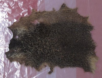 Picture of this lot Raw Fur - Woodchuck