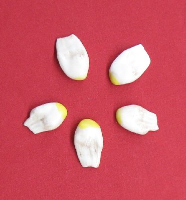 Picture of this lot Simulated Teeth
