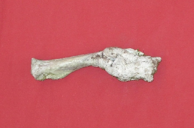 Picture of this lot Miscellaneous Bones