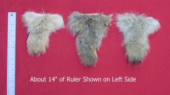Picture of this lot Tanned Tails, Raccoon, Coyote, Fox Tails