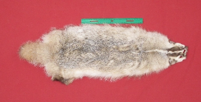 Picture of this lot Tanned Badger Hides, Furs, Pelts, Skins