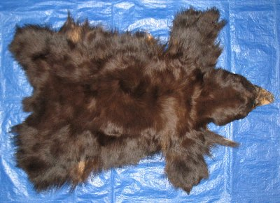 Picture of this lot Tanned No Feet Black Bear Hides, Furs, Pelts, Skins
