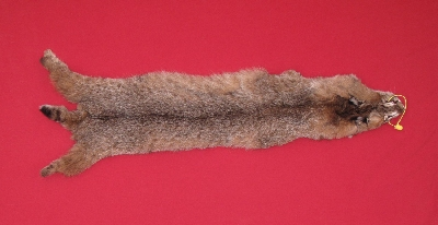 Picture of this lot Tanned Bobcat Hides, Furs, Pelts, Skins