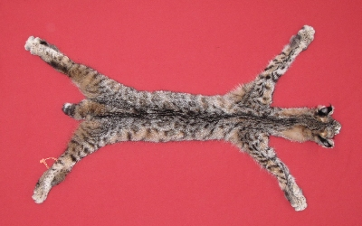 Picture of this lot Tanned Taxidermy Bobcat Hides, Furs, Pelts, Skins