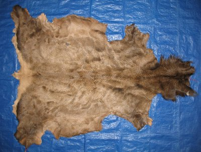 Picture of this lot Tanned Elk Hides, Furs, Pelts, Skins