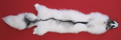 Picture of this lot Tanned Arctic Marble Cross Fox Hides, Furs, Pelts, Skins