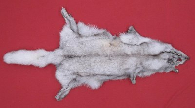Picture of this lot Tanned Blue Fox Hides, Furs, Pelts, Skins