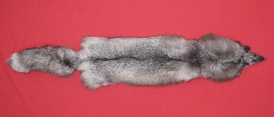 Picture of this lot Tanned Blue Frost Fox Hides, Furs, Pelts, Skins