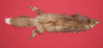Picture of this lot Tanned Mutation Fox Hides, Furs, Pelts, Skins