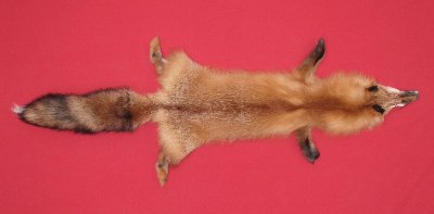 Picture of this lot Tanned Red Fox Hides, Furs, Pelts, Skins