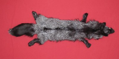 Picture of this lot Tanned Silver Fox Hides, Furs, Pelts, Skins