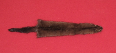 Picture of this lot Tanned Wild Mink Hides, Furs, Pelts, Skins