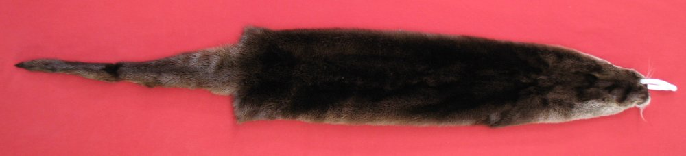Picture of this lot Tanned Otter Hides, Pelts, Skins