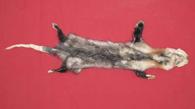 Picture of this lot Tanned Opossum Hides, Furs, Pelts, Skins