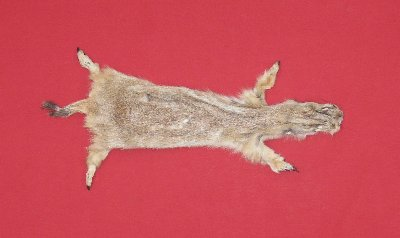 Picture of this lot Tanned Prairie Dog Hides, Furs, Pelts, Skins