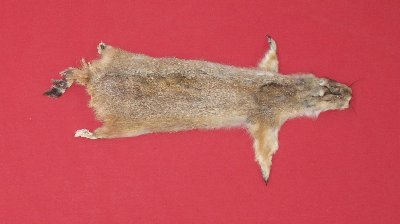 Picture of this lot Tanned Taxidermy Prairie Dog Hides, Furs, Pelts, Skins