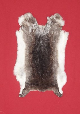 Picture of this lot Tanned Rex Rabbit Hides, Furs, Pelts, Skins