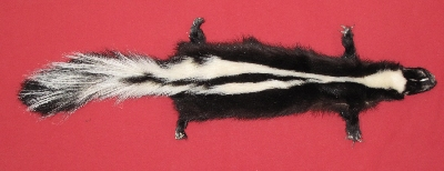 Picture of this lot Tanned Skunk Hides, Furs, Pelts, Skins
