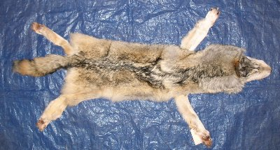 Picture of this lot Tanned Wolf Hides, Pelts, Skins