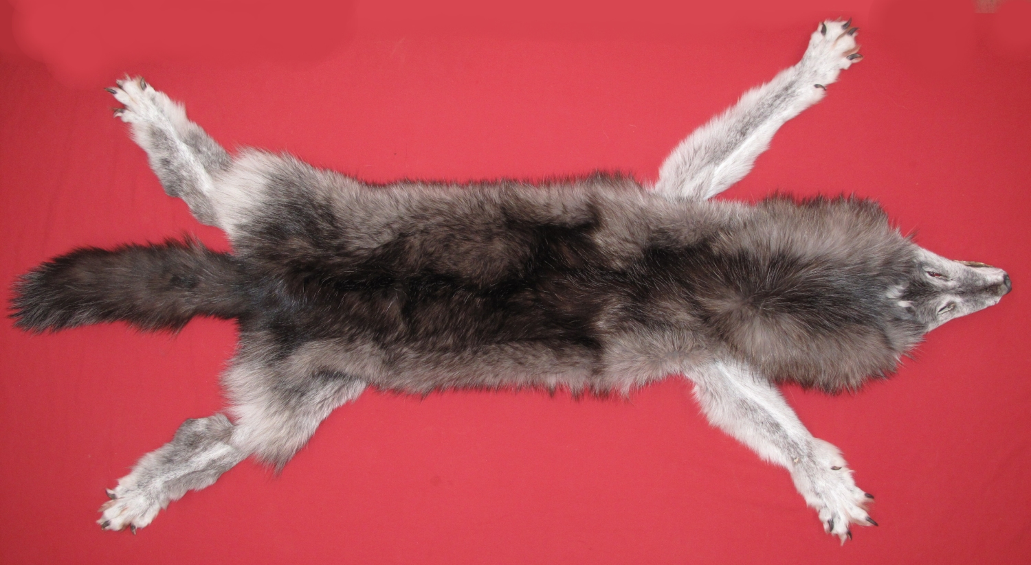 Tanned Furs Wolf Taxidermy Quality 7481 0220