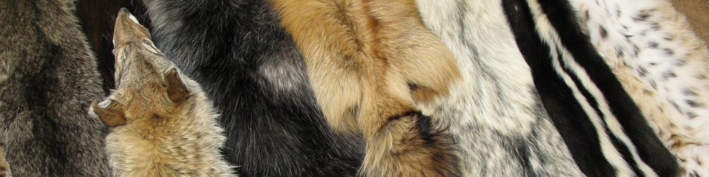 Chinchilla For Sale >> Tanned Hides, Furs, Animal Pelts and Skins for sale by ...