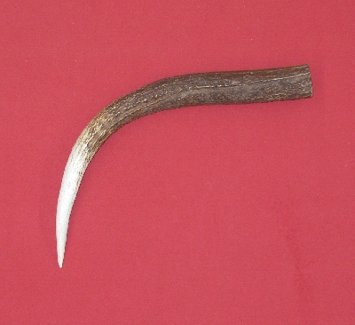 Picture of this lot Elk Antler Tines