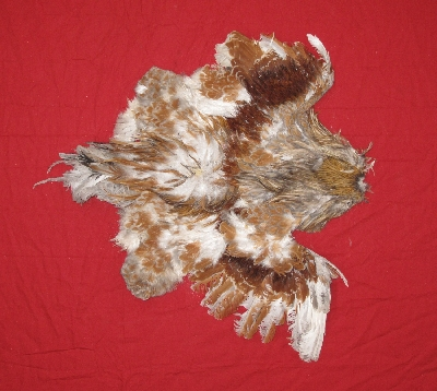 Picture of this lot Chicken Feathers, Hackles