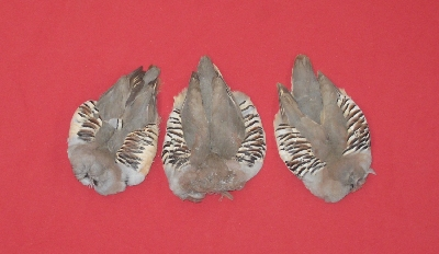 Picture of this lot Feathers - Chukar