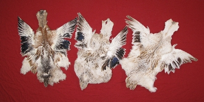 Picture of this lot Duck Feathers and Skins
