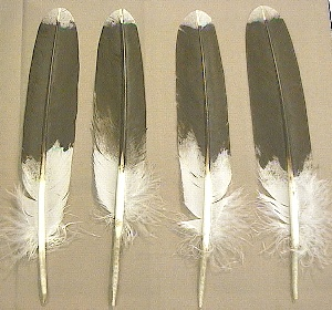 Picture of this lot Hawk Feathers Imitation