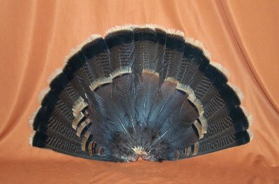 Picture of this lot Wild Turkey Feathers, Wings, Tails and Beards