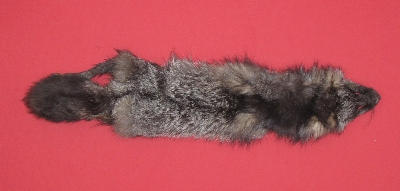 Picture of this lot Raw Fur - Silver Fox