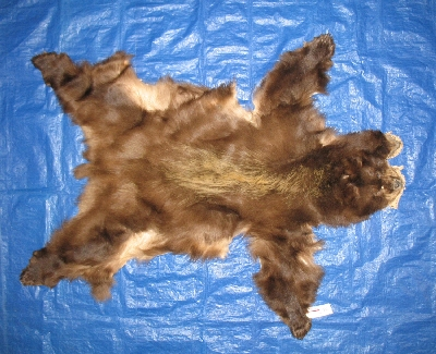 Picture of this lot Tanned Complete Black Bear Hides, Furs, Pelts, Skins