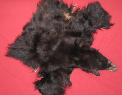 Picture of this lot Tanned Black Bear Taxidermy Capes