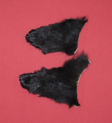 Picture of this lot Tanned Black Bear Feet