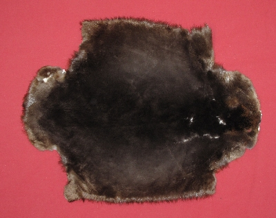 Picture of this lot Tanned Plucked and Sheared Beaver Hides, Furs, Pelts, Skins