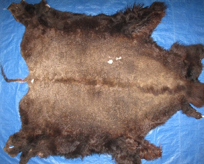 Picture of this lot Tanned Buffalo Robes, American Bison