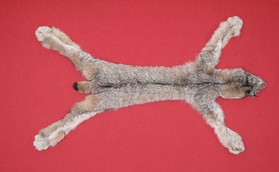 Picture of this lot Tanned Taxidermy Canadian Lynx Hides, Furs, Pelts, Skins