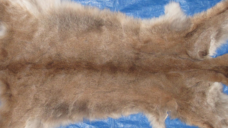 Tanned Furs Cougar 6340 0701 Hideandfur Com